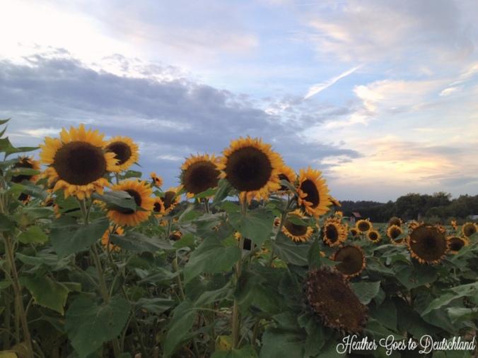 sunday pics13