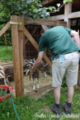 BV makes some goat friends.