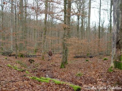 Steigerwald, 2011